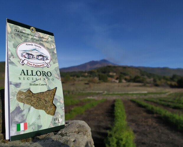 Alloro siciliano. Coltivato secondo una forma di agricoltura sostenibile a basso impatto ambientale