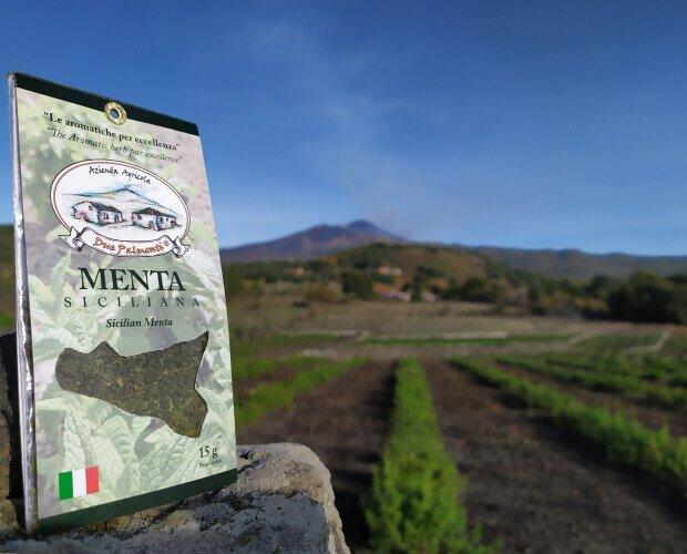 Menta siciliana. Coltivato secondo una forma di agricoltura sostenibile a basso impatto ambientale