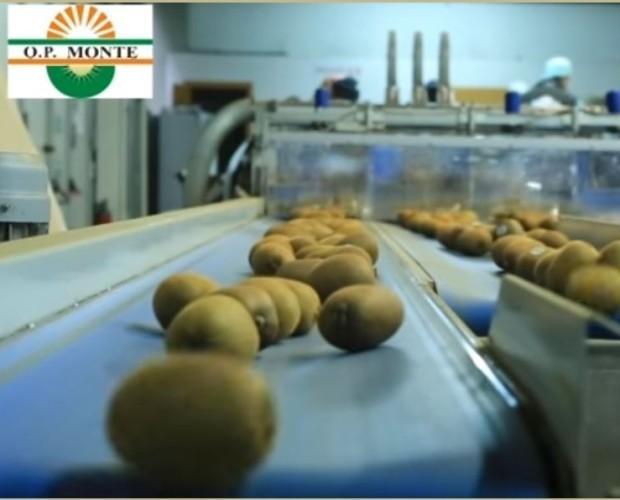 kiwi. Prodotti freschi di qualità Bio