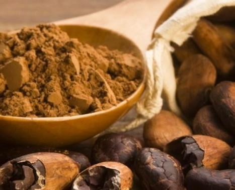 Cacao.Vent'anni d'esperienza nel settore.