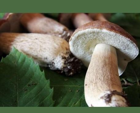 Funghi e Tartufi.Funghi Porcini Lattanzi