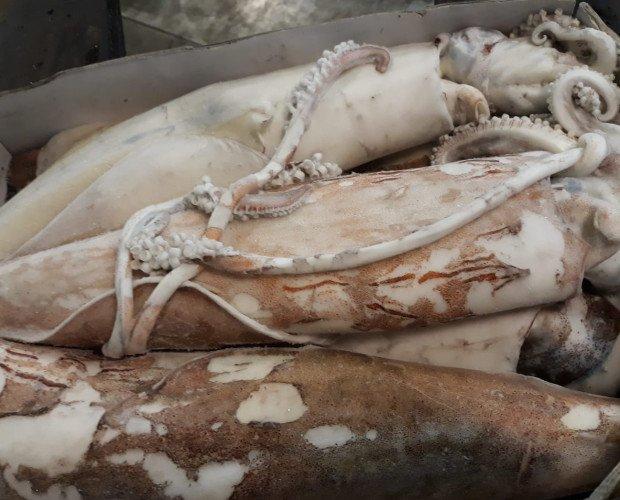 calamari 500_1000. calamari congelati a bordo 500/1000