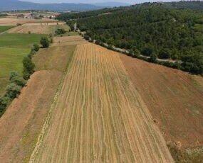I nostri campi in Toscana. Qui seminiamo e cresciamo il nostro Orzo