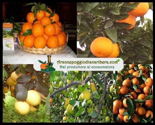 Frutta Fresca.Prodotti tipici locali