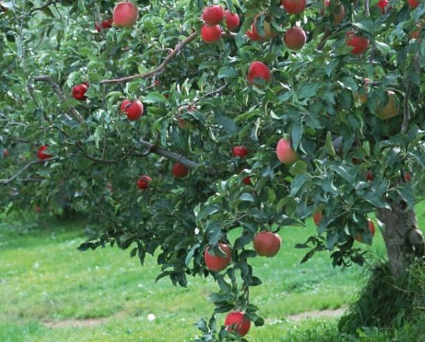 Frutta Fresca.Come colta al momento
