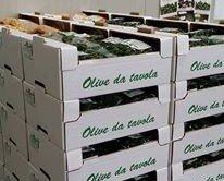 cartoni olive.
