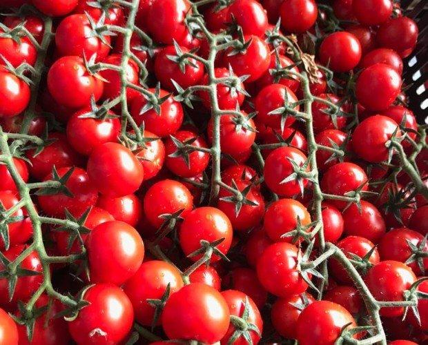 Pomodori.Pomodoro Ciliegino