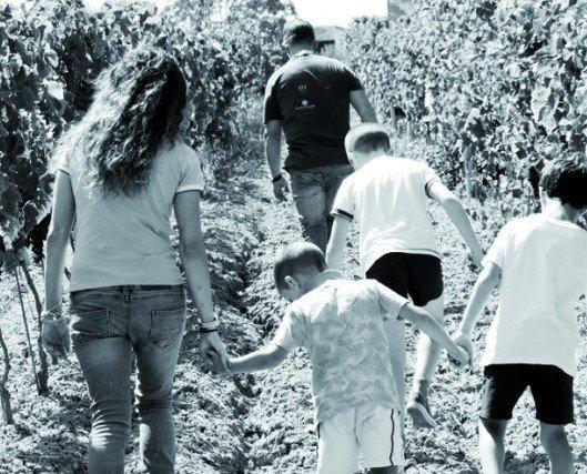 famiglia di spalle. La famiglia Bonsignore cammina in mezzo ai filari di vigna