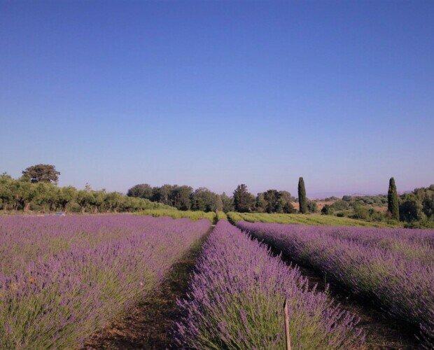 Erbe e Spezie.I nostri prodotti sono coltivati in Sardegna, a 30km da Cagliari