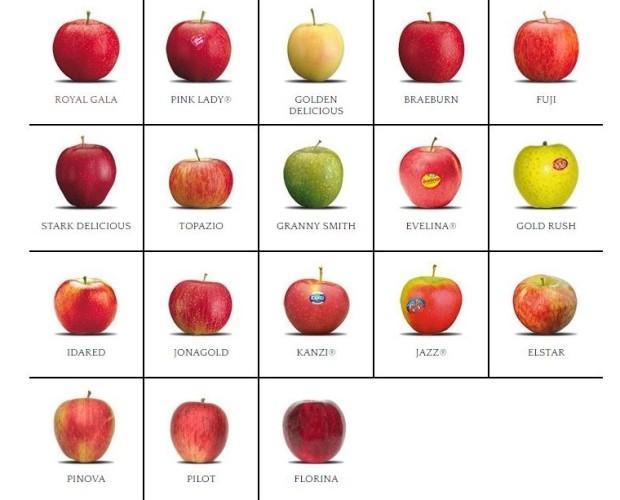Mele 18 varietà. La migliore qualità per ogni tipologia