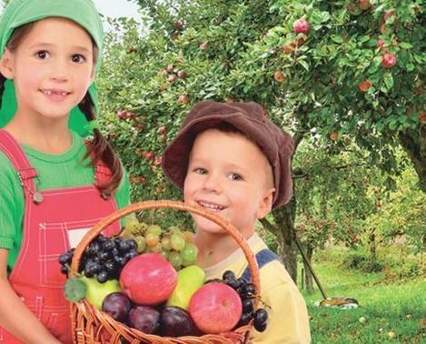Frutta Fresca.Azienda storica nel settore ortofrutticolo