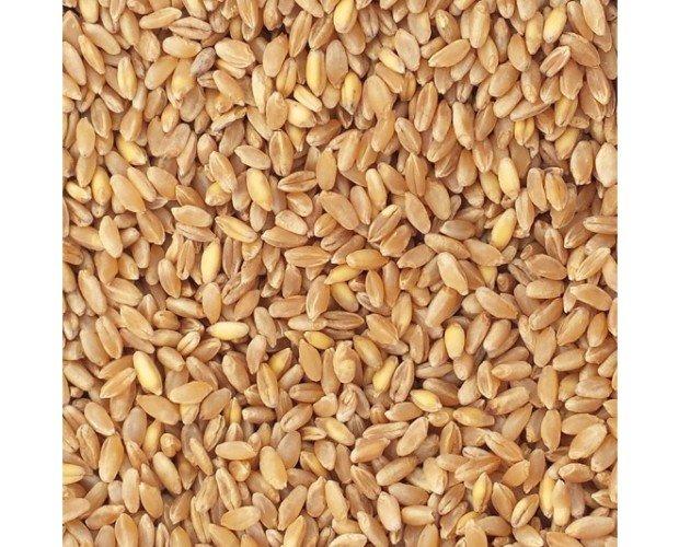grano da Macina. Grani pronti alla macinazione per produrre la tua farina proprio come una volta.