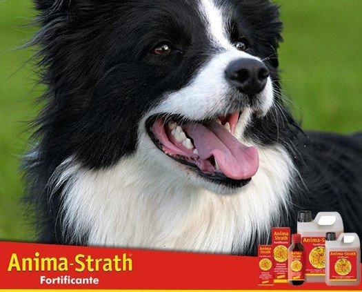 Anima Strath. integratore per animali