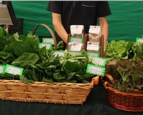 Verdura Fresca.Produzione e vendita di prodotti locali