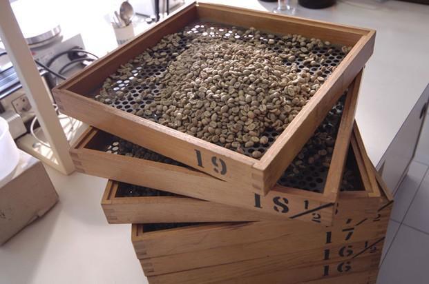 commercianti di caffè verde europa