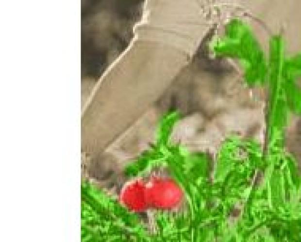 Conserve di Verdura. Sugo di Pomodoro. I Marchi