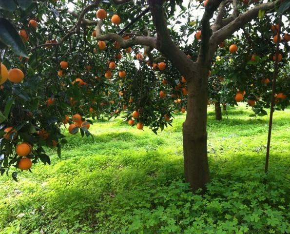 Le nostre Arance. Prodotti Bio Made in Sicily