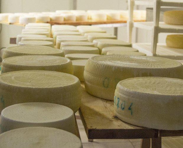 Salatura del formaggio. Salatura del formaggio in assi di legno