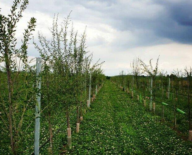 Le piante. Uno dei nostri campi a Villareggia