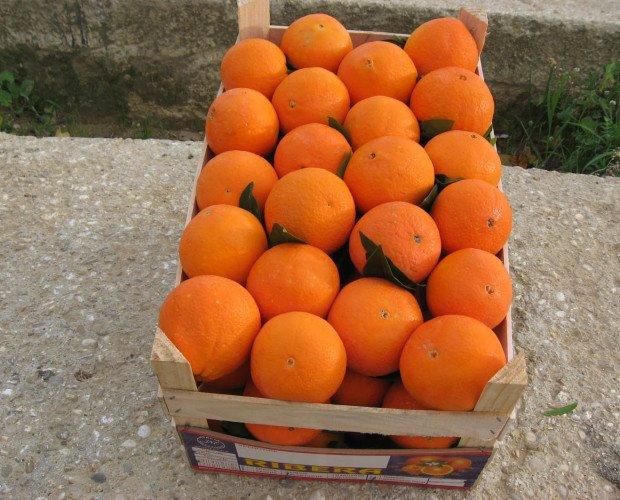 arance 1. arance 1