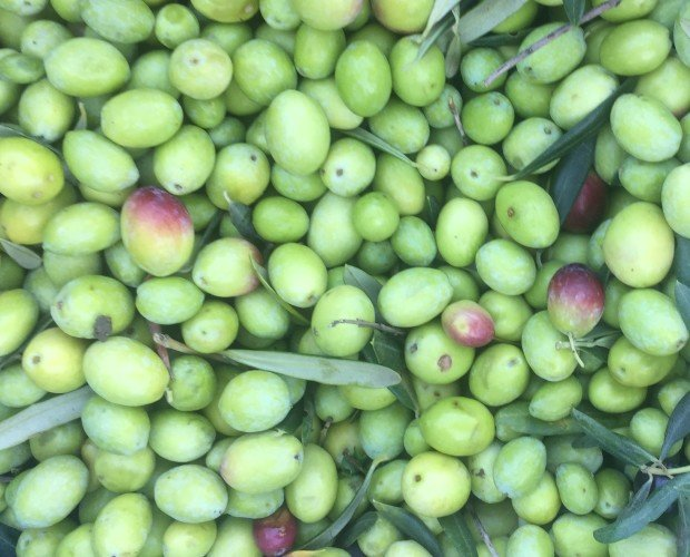 Olio Extra Vergine di Oliva.olive