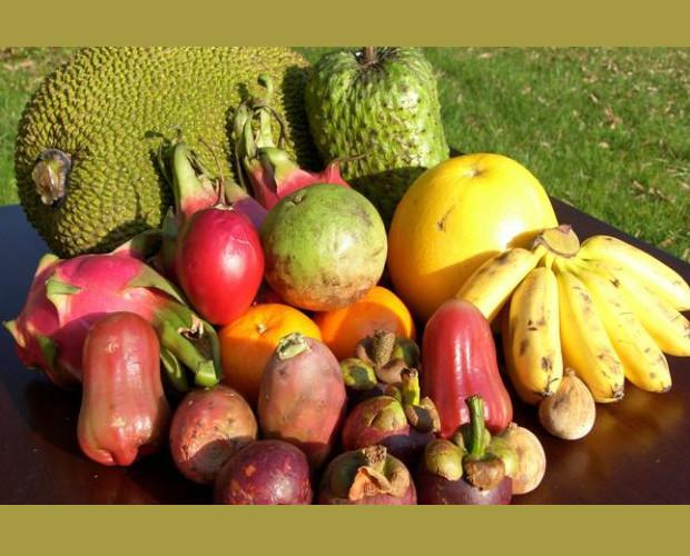 . Assortimento frutta esotica Fruit Chef