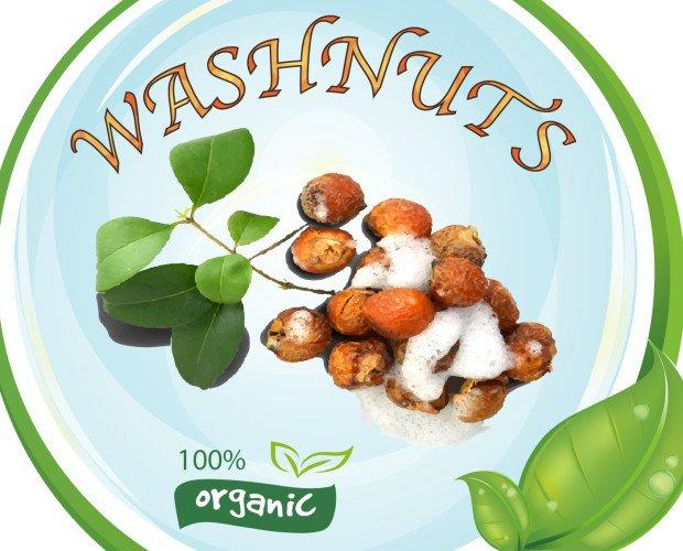 Logo Noci Saponarie. Le nostre noci saponarie per un bucato bio e tanto altro, con un forte risparmio !