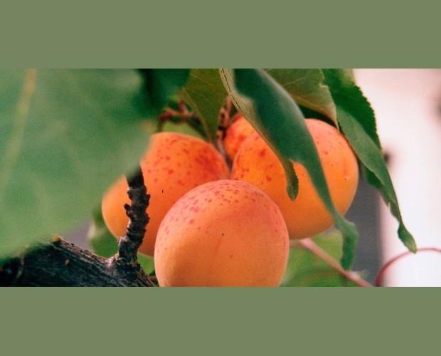 Frutta Fresca.Prodotti italiani GAP