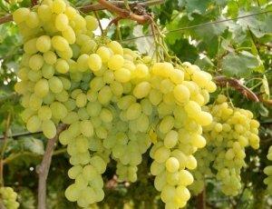 Frutta ed ortaggi siciliani con coltivazione naturale